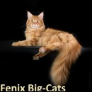 Fenix Big-Cats