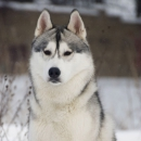 Husky Haven About Time