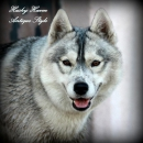 Husky Haven Antique Style