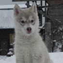 Husky Haven Nicole Kidman' Love