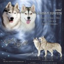 Husky Haven Silvery Moon